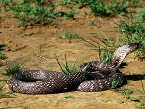 Vivoras-Serpientes-Culebras-Snake-Ofidios-6