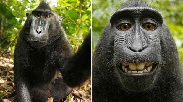 Este es el primer selfie animal.(Foto: Difusión)