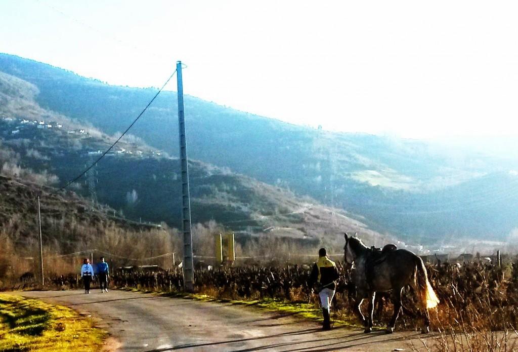 La tala no impide que los vecinos sigan paseando a pie o con sus caballos