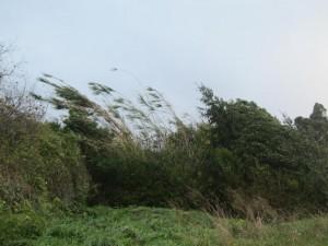 viento a 130 km/h