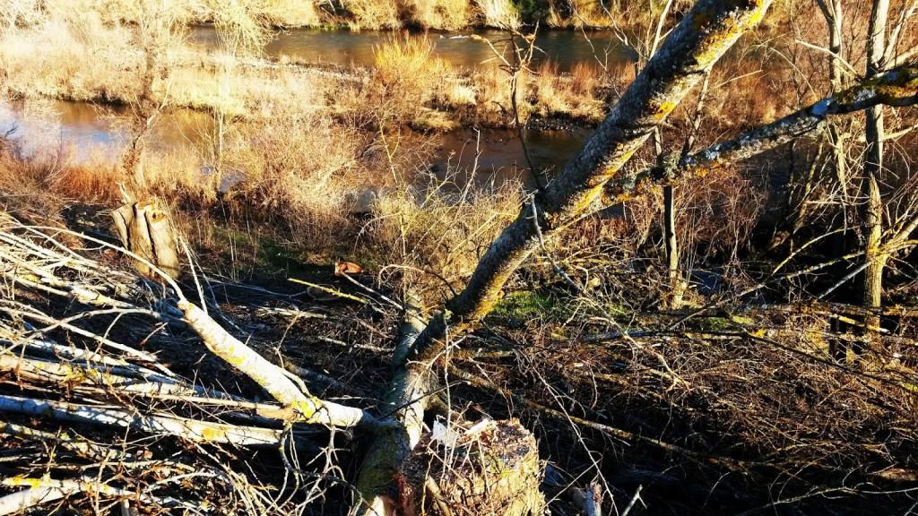 Ramas y árboles cortados en el entorno del río