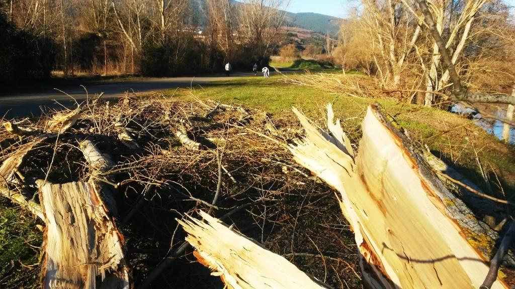 Chopos y árboles talados en el paraje de A Veiga de A Rúa, lugar que es empleado para hacer deporte
