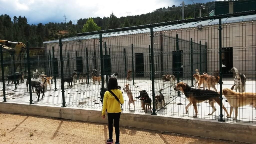 70 perros aguardan un hogar en la perrera comarcal de valdeorras y el centro se extiende a - Perrera de vilafranca ...