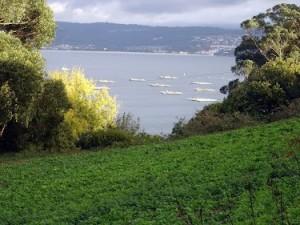 Huerta con vistas a la Ría de Betanzos