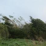 fuerte-viento