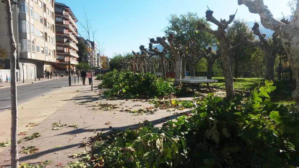 Los árboles desnudos tras la poda en O Malecón