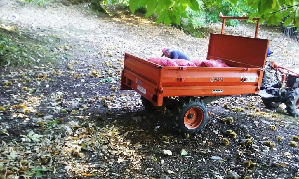 Un hombre junto a su tractor de castañas en Alixo