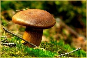mushroom-486586_640