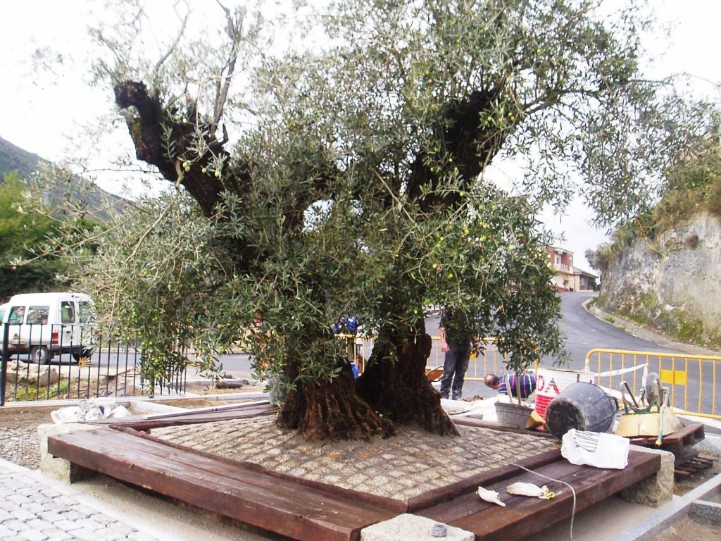 La base del olivo llevará piedras del siglo XIX de la antigua N-536