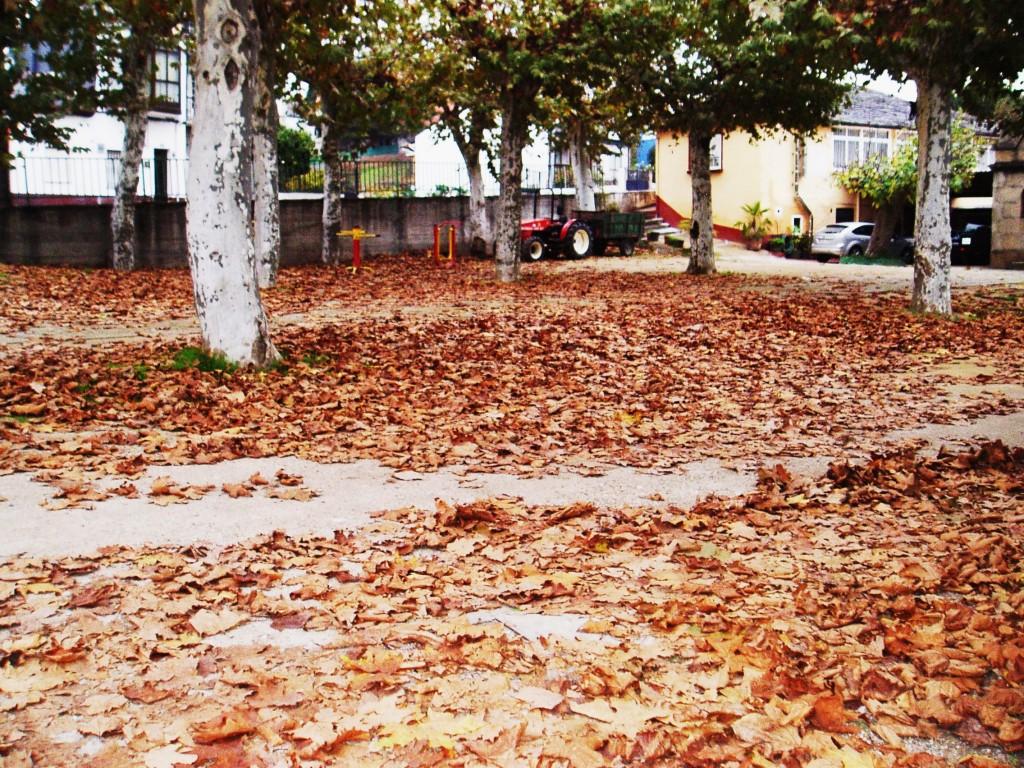 Manta de hojas en el Campo de San Roque de A Rúa