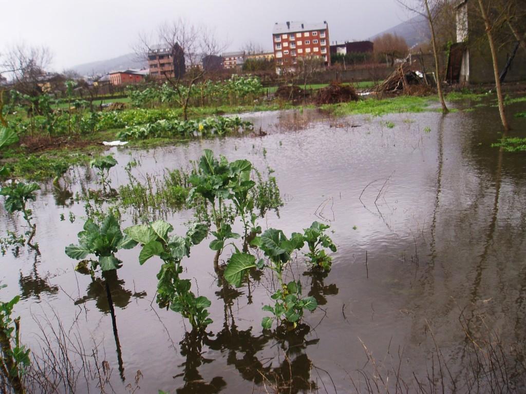 Una huerta inundada por el río Sil en O Barco