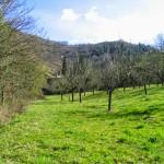 Foto de otra de las propiedades a la venta en aldeasabandonadas.com/