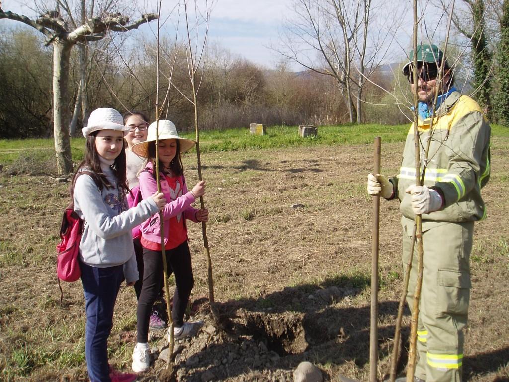 Con los árboles para plantar