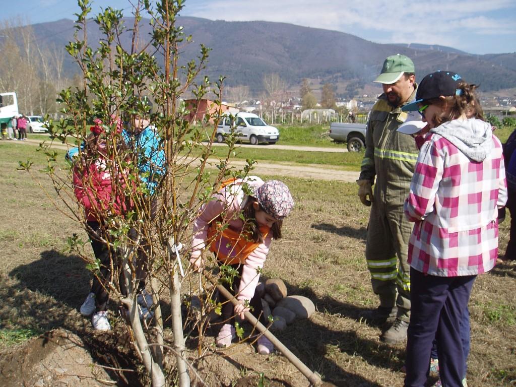 Plantando árboles bajo la batuta de un agente forestal