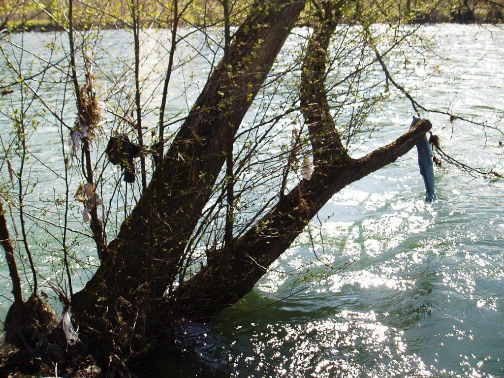Bolsas colgantes en árboles del Sil