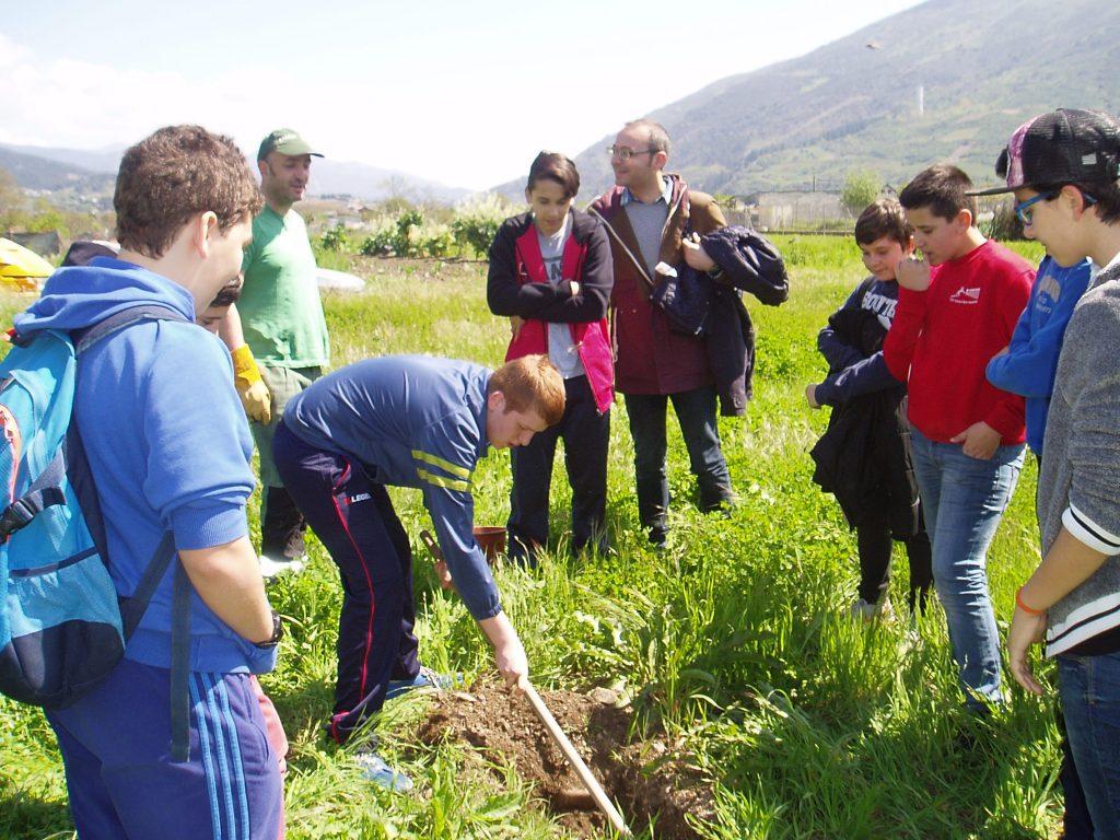 Un momento de la plantación por parte de los escolares en O Aguillón