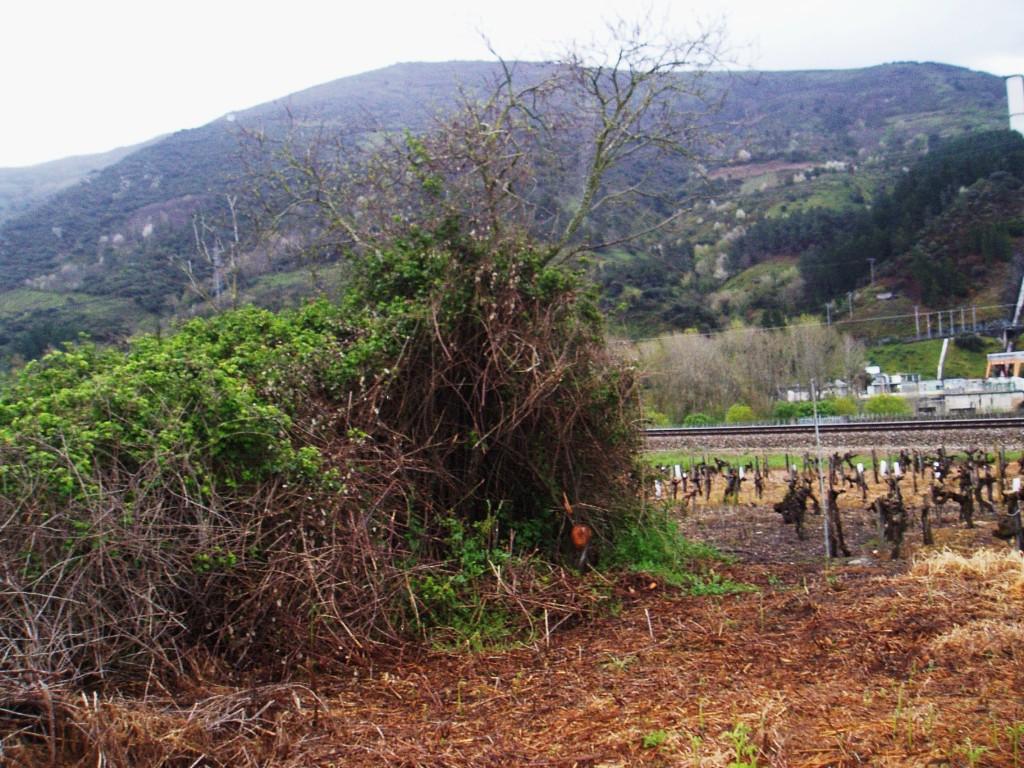 Un terreno devorado por silvas y maleza en A Rúa