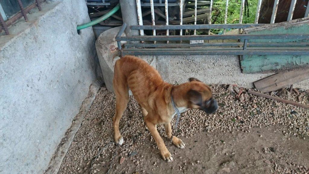 El perro desnutrido, ya adoptado
