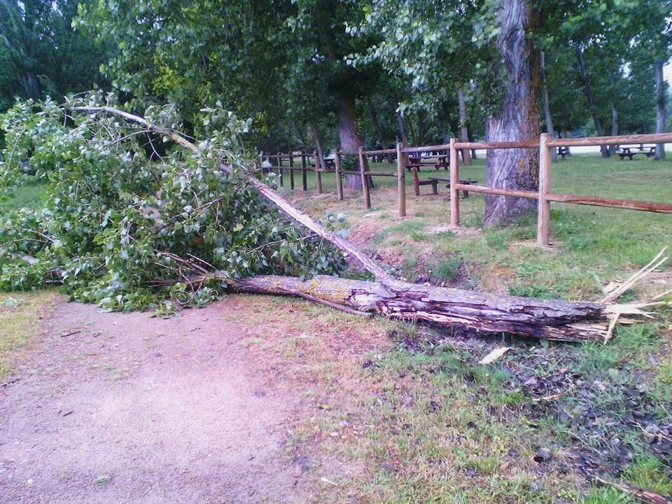 Foto que circuló por las redes sociales sobre la reciente caída de dos árboles en la chopera de A Rúa