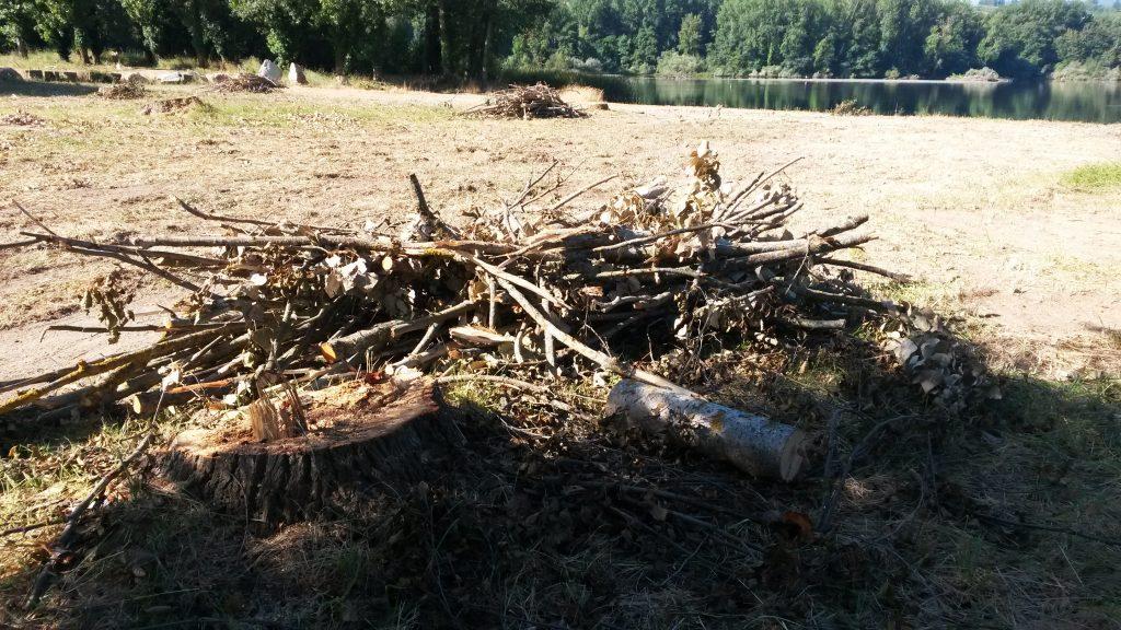 Las ramas que recogen los vecinos