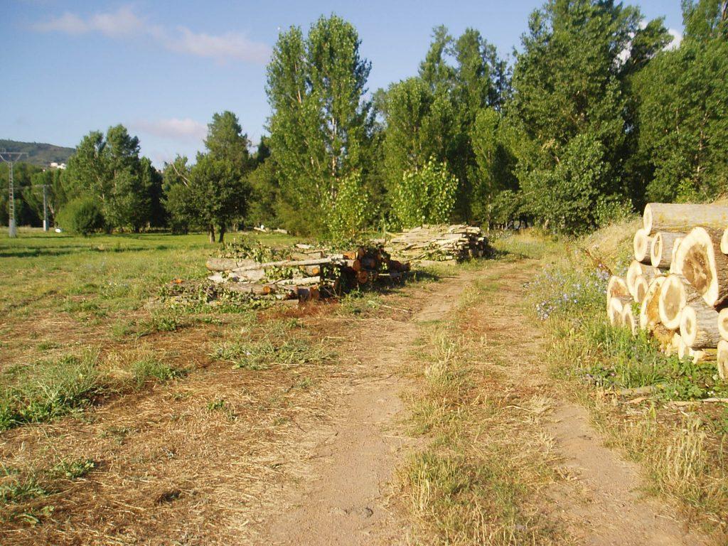 Primeros árboles talados