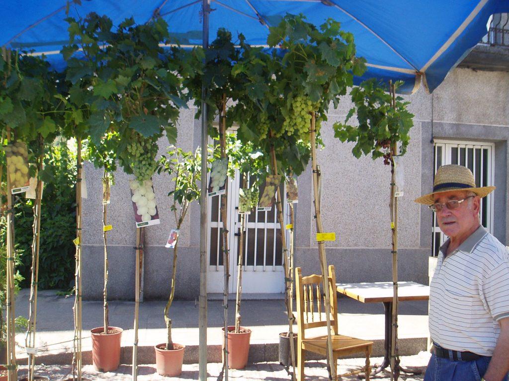Injertos con uvas