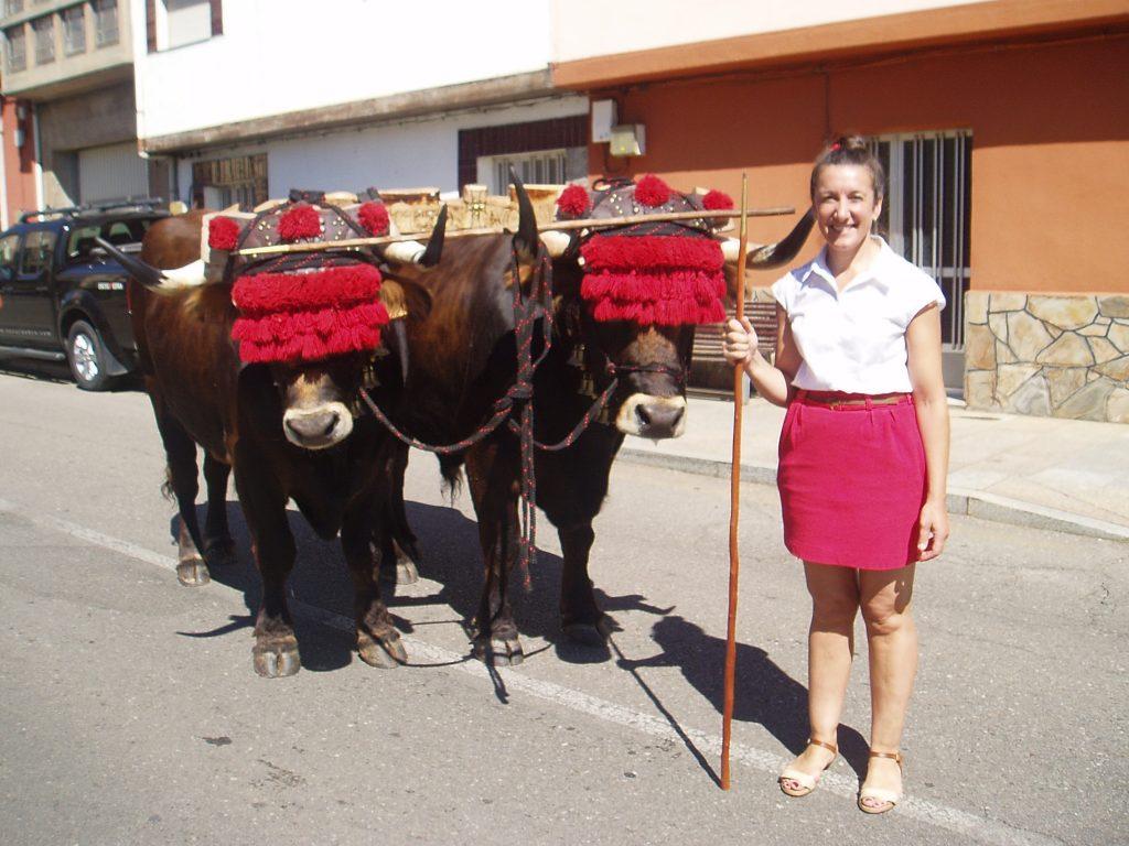 Los  bueyes de la ganadería Nogueira