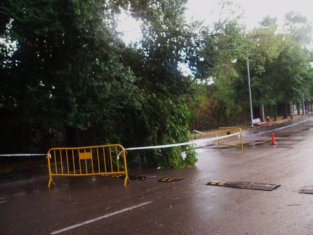 Parte del árbol caído sobre el vial de las piscinas y señalizado por la Policía Local