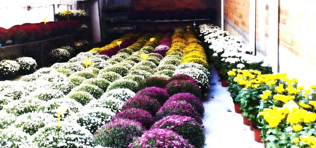 Cientos de flores y plantas a la venta