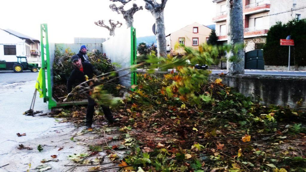 Retirando ramas